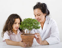 Teacher pupil sience tree. Teacher girl pupil science class small tree over white Stock Image