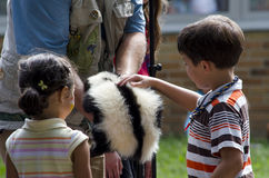 Teacher shows skunk to students Royalty Free Stock Photo
