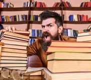 Teacher or student with beard sits at table with glasses, defocused. Mad scientist concept. Man on shouting face between. Piles of books, while studying in stock image