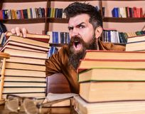 Teacher or student with beard sits at table with glasses, defocused. Man on shouting face between piles of books, while. Studying in library, bookshelves on royalty free stock images