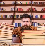 Teacher or student with beard sits at table with glasses, defocused. Man on strict face between piles of books, while. Studying in library, bookshelves on royalty free stock image