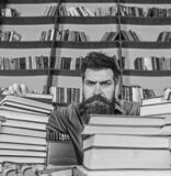 Teacher or student with beard sits at table with glasses, defocused. Man on strict face between piles of books, while. Studying in library, bookshelves on royalty free stock photography