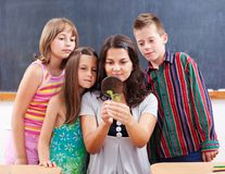 Teacher and students look at plant Royalty Free Stock Photos