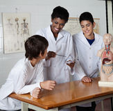 Teacher Teaching Experiment. Young female teacher teaching experiment to male high school students at desk in science lab Royalty Free Stock Image