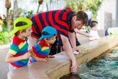 Teacher and two little kid boys feeding rays in a recreation are Stock Image