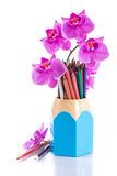 Teachers' Day. Phalaenopsis branch with colored pencils on white background stock images