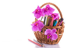 Teachers' Day. Phalaenopsis branch with colored pencils on white background stock photo