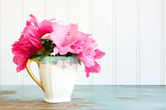 Teacup with azalea flowers. Small old teacup with azalea flowers Royalty Free Stock Photos