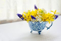 Teacup bouquet of forsythia and muscari. Teacup full of a spring flower bouquet Royalty Free Stock Photo