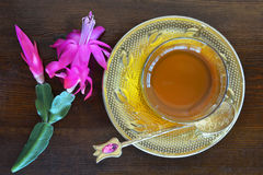 Teacup and Christmas cactus Stock Images