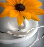 Teacup, daisy and spoon Royalty Free Stock Photo
