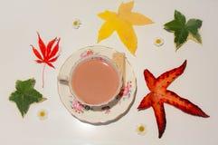 Teacup fancy Stock Photos