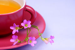 Teacup with flower - enjoy your fresh tea Royalty Free Stock Photo