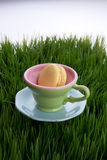 Teacup in grass Royalty Free Stock Photos