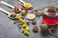Teacup i ziele na popielatym tle Zdjęcie Stock