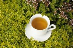 Teacup mit Kräutertee Stockfotos