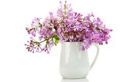 Teacup with Purple Flowers. Isolated on White Royalty Free Stock Photos