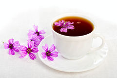Teacup on white background. Royalty Free Stock Images