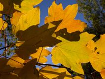 Teaf do boati do bakgraund do outono sun_2 das folhas de outono Foto de Stock Royalty Free