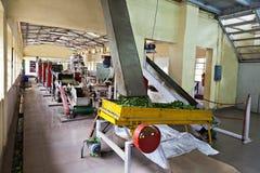 Teafabrik, Indien royaltyfri fotografi