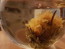 Teaflower стоковые фотографии rf