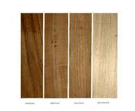Teak, Apple,Walnut and Blue Cottonwood samples Stock Image