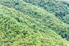 Teak forest Royalty Free Stock Image