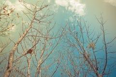 Teak forest Stock Image