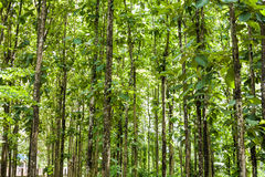 Teak forests to the environment Royalty Free Stock Photography