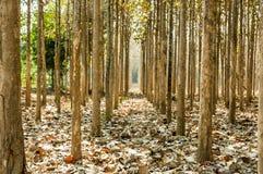 teak houten landbouwbedrijf Stock Foto