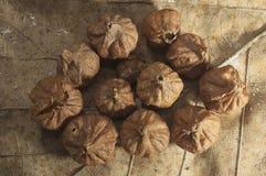 Teak Seeds over Teak Leaf stock photo