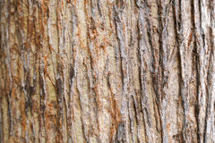 Teak tree bark texture Stock Photo