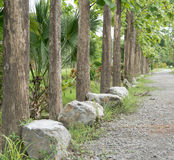 Teak walk way. To the green forest Royalty Free Stock Photos