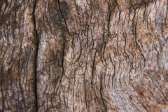 Teak wood Royalty Free Stock Photography