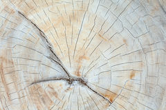Teak wood stump background Stock Images