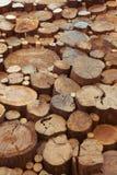 Teak wood stumps background Stock Photography