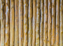 Teak wood vertical background Royalty Free Stock Photography