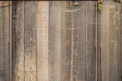 Teak wooden wall background. With vine leaf in autumn Stock Images