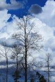 Teakholz-Wald am bewölkten Tag lizenzfreies stockfoto