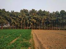 Teakholzbäume arbeiten im Garten stockfoto