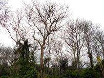 Teakträ Forest Die Royaltyfria Foton