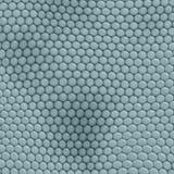Teal игуаны кожи гада Стоковое фото RF