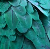 Teal Blue Macaw Feathers. Macro photo of blue/turquoise macaw feathers Stock Image