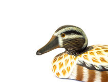 Teal duck. A teal duck model isolate royalty free stock photography