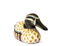 Teal duck. Model isolate background royalty free stock photo