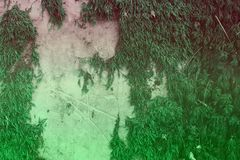 Teal, sea-green design grungy mossy castle wall texture - fantastic abstract photo background royalty free stock image