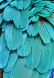 Teal/Turquoise Macaw Feathers Stock Photos