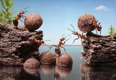 Team of ants construct dam, teamwork. Team of ants work constructing dam, teamwork Royalty Free Stock Photography