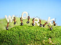 Team of ants constructing word work, teamwork Royalty Free Stock Photos