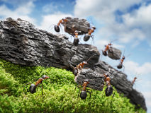 Team of ants costructing Wall, teamwork concept Royalty Free Stock Photo